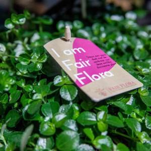 Erfolgreicher Start Fair Flora bei FloraZON