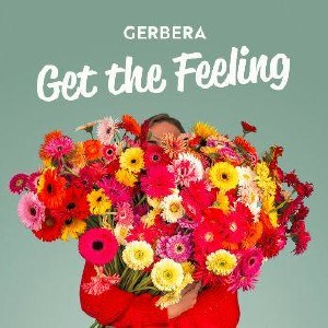 Month of the gerbera